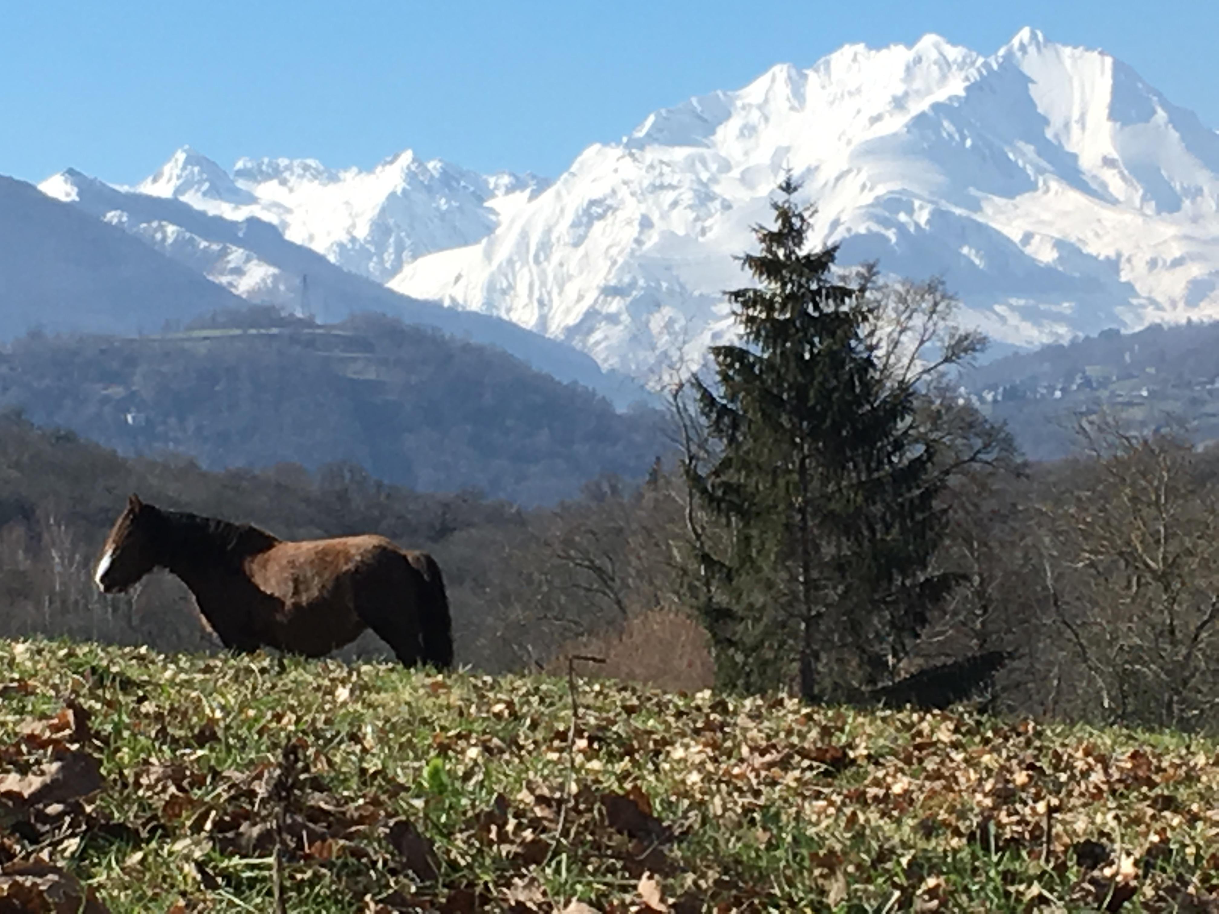 Paysage de montagne, Pyrénées